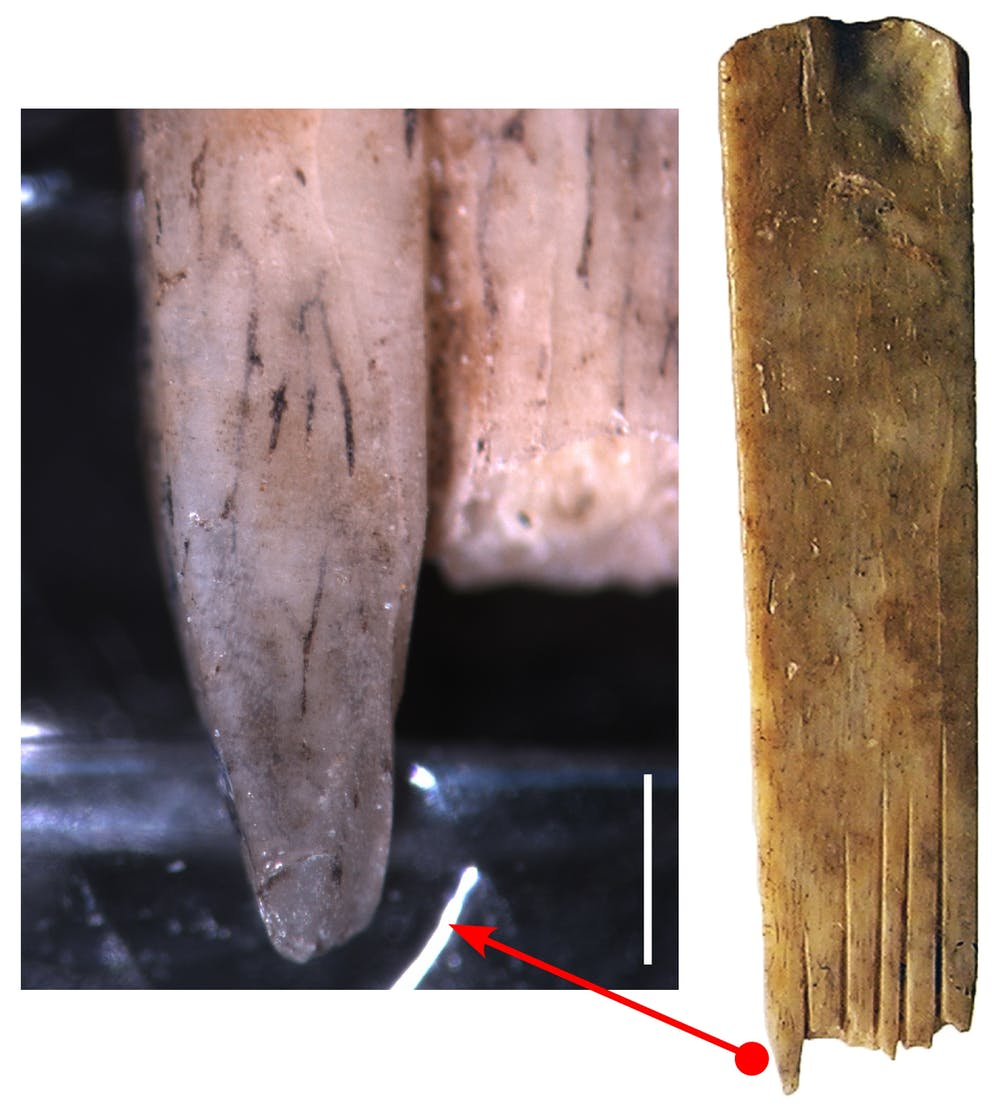 Ink staining on one of the human bone combs. Author provided