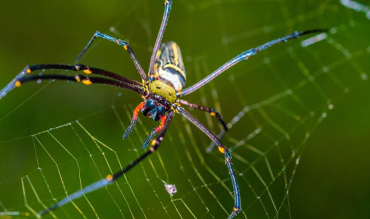 Some people are afraid of spiders, others of snakes or even cats and dogs. Aris Suwanmalee/Shutterstock.com