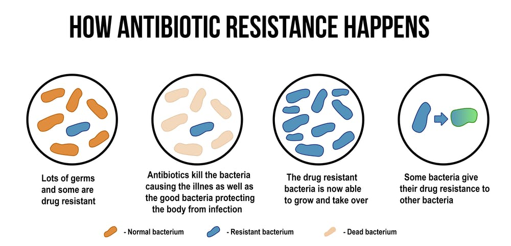 How to train the body's own cells to combat antibiotic resistance