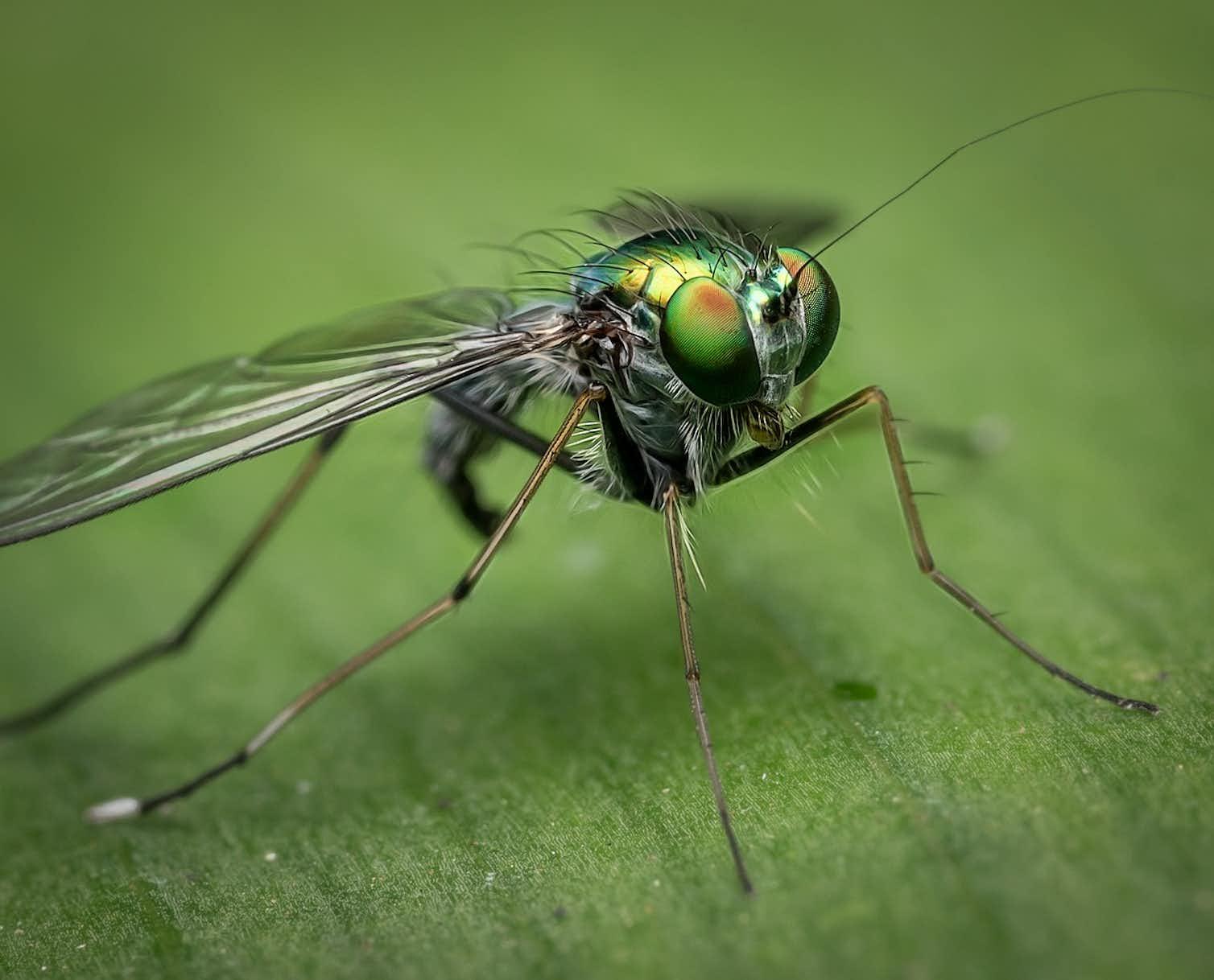Our natural world depends on arthropods. Photo credit: Steve Raubenstine/Pixabay
