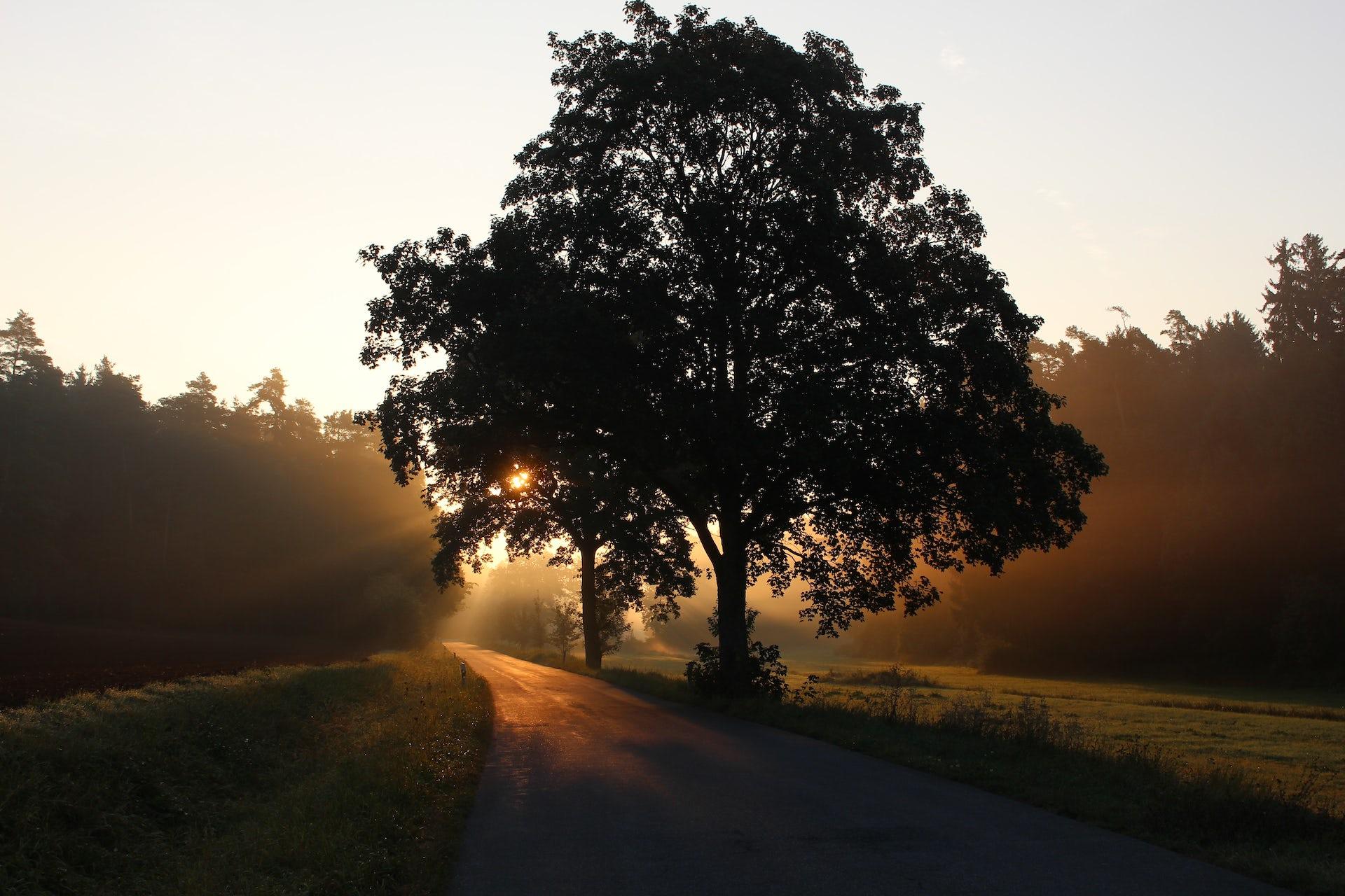 Qu'est-ce qui fait qu'un arbre est un arbre ?