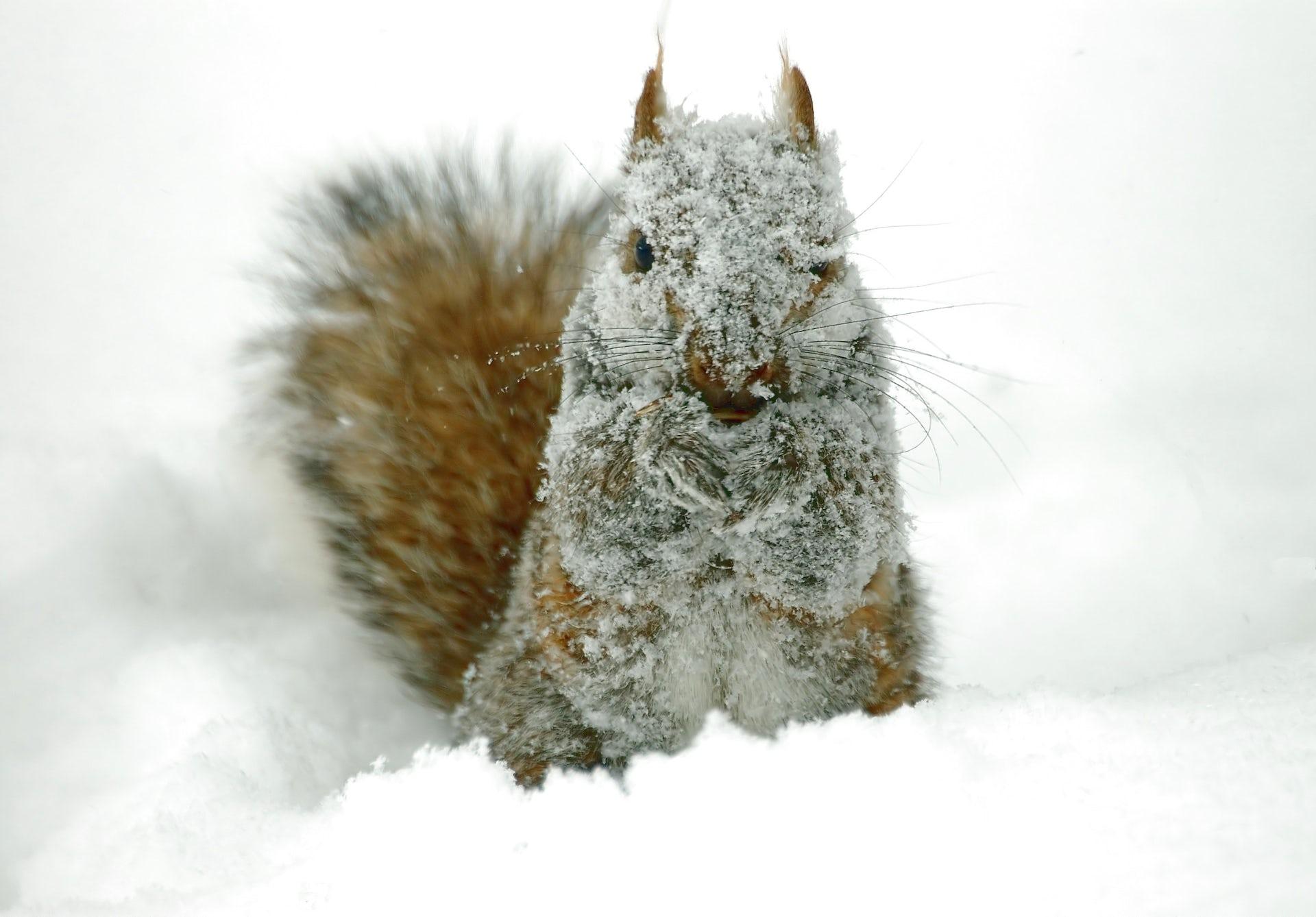 Is winter miserable for wildlife?