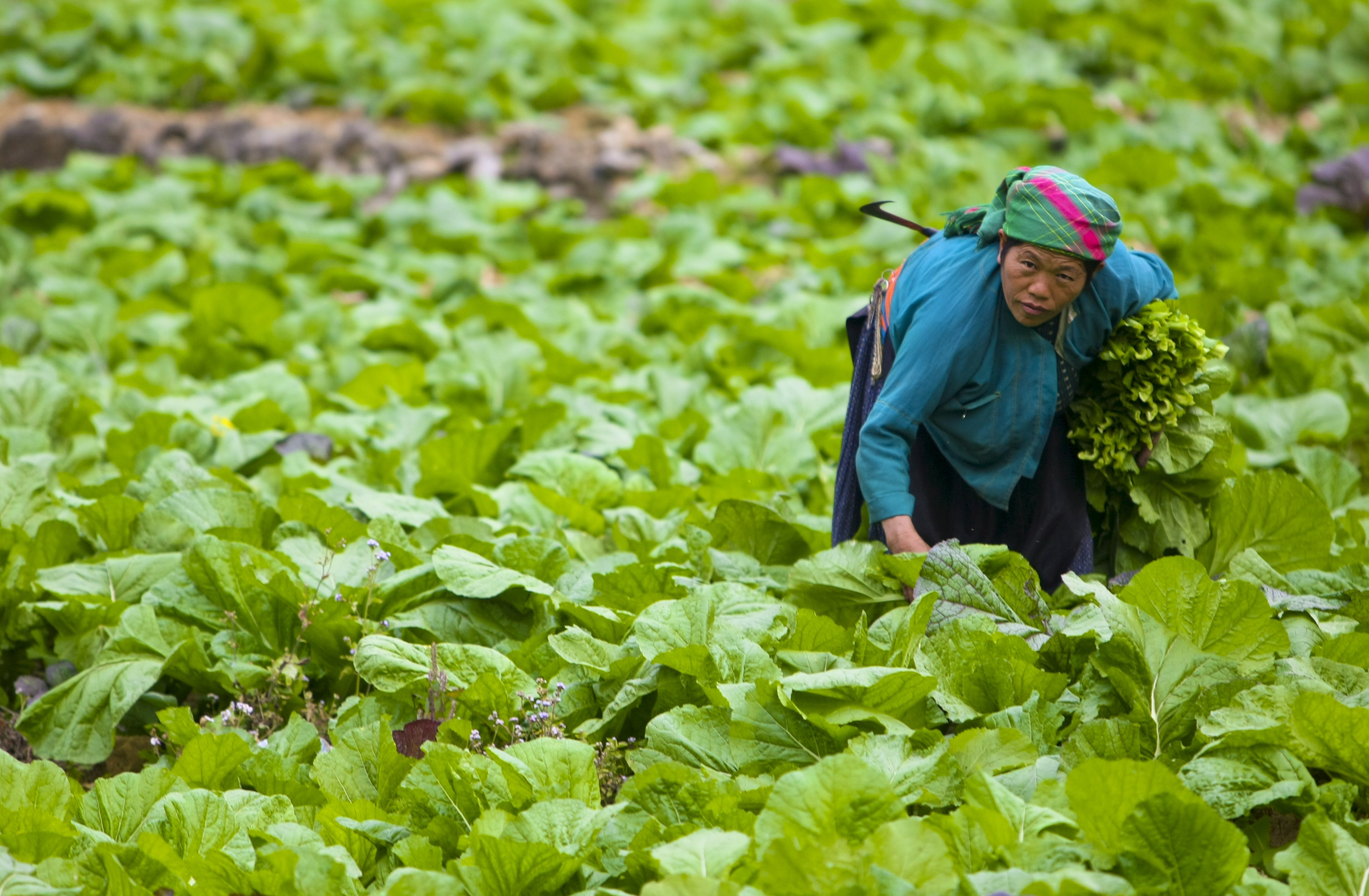 Image result for Any 'planetary diet' must also work for the poorest and most vulnerable