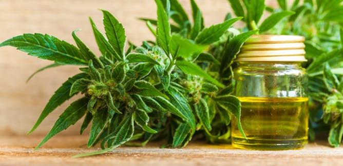 what is cbd oil made of