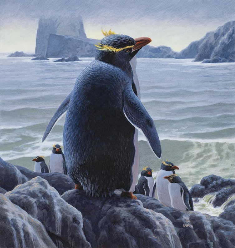 Old bones reveal new evidence about the role of islands in penguin evolution