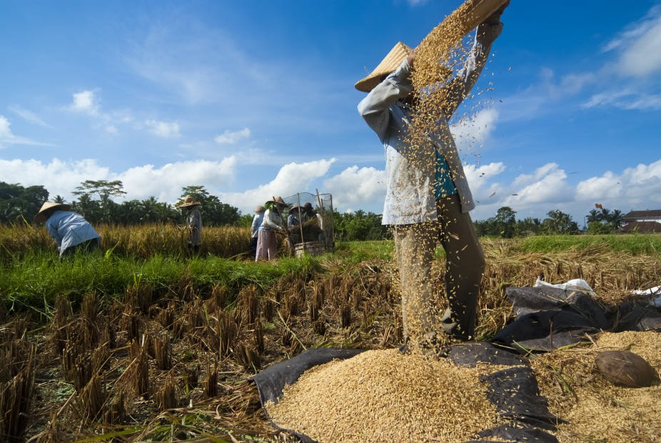 Why rice self-sufficiency has such a grip on the Indonesian