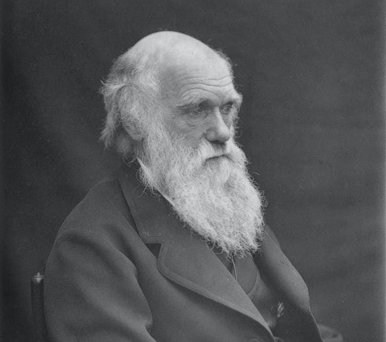 Retrato de Charles Darwin tomado alrededor de 1874 por su hijo Leonard Darwin.Wikimedia Commons / Leonard Darwin,CC BY-SA