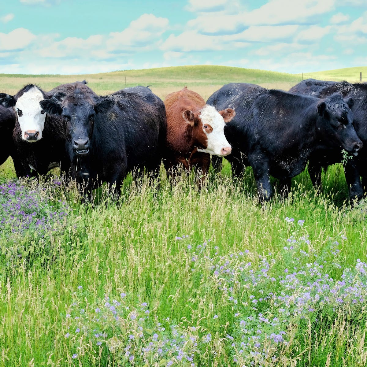 Regenerative agriculture can make farmers stewards of the land again