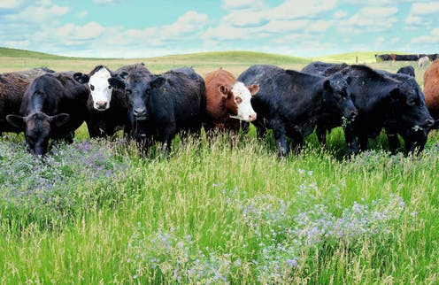 Regenerative agriculture can make farmers stewards of the