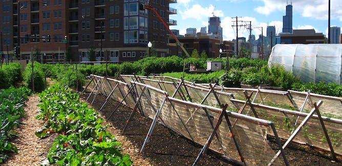 Αστικές καλλιέργειες