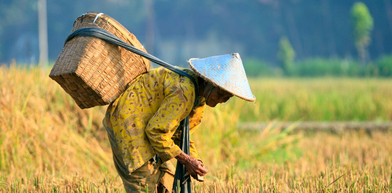 Mengapa Indonesia Perlu Dorong Petani Alih Profesi Pentingnya Dana Desa