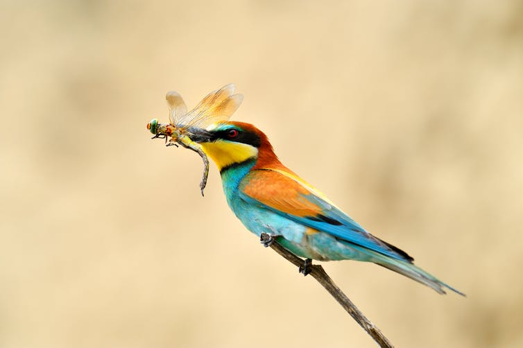 bird catches insect