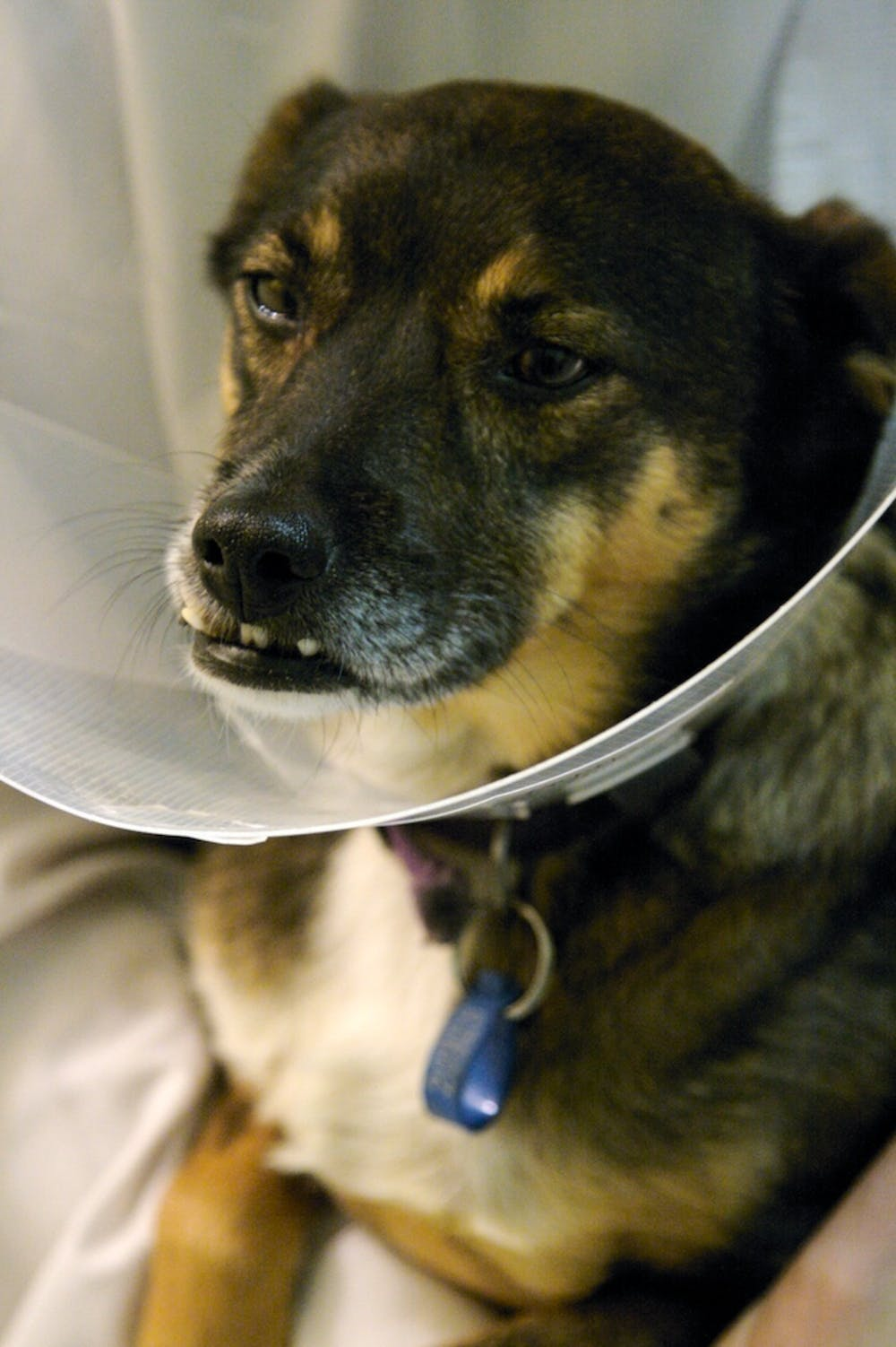 Why the low hygiene standards between vets and pets?