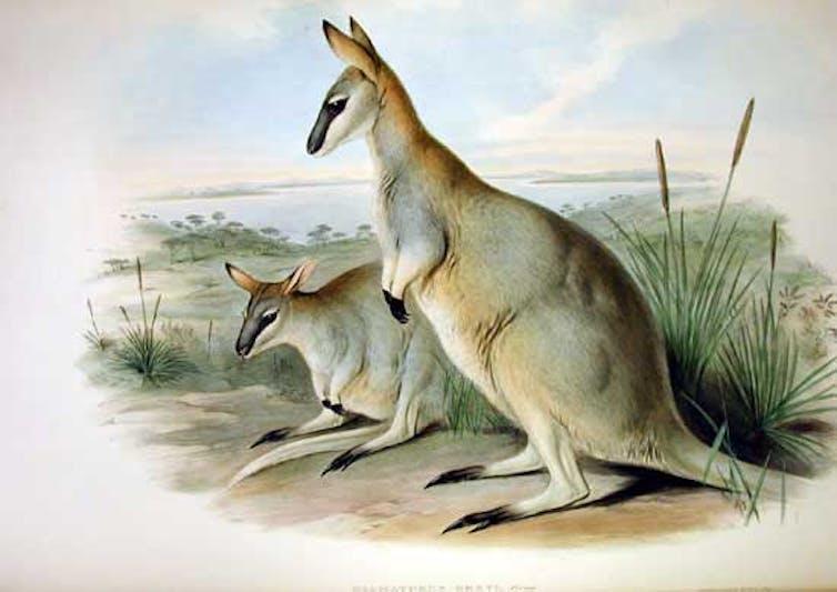 how to stop more Australian species going extinct