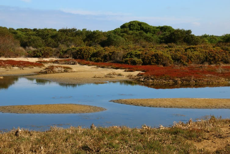 Rising seas allow coastal wetlands to store more carbon