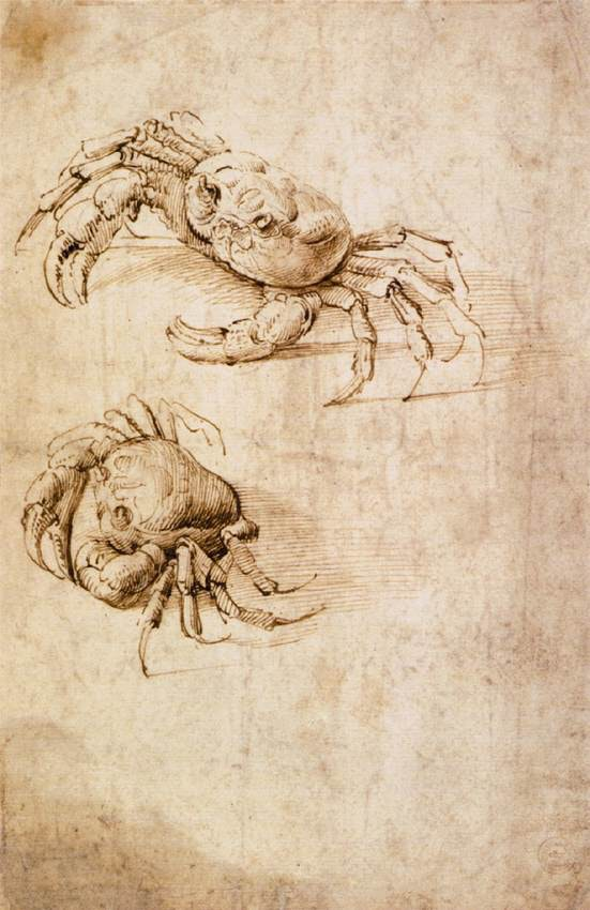 Leonardo da vinci art design