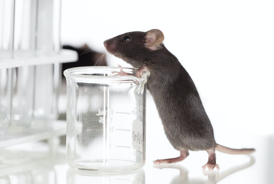 Australia's animal testing laws are a good start, but don't