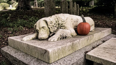 Why you shouldn't bury your pet in the backyard