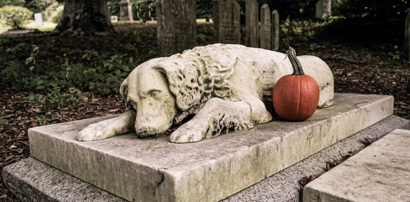 Why You Shouldn T Bury Your Pet In The Backyard