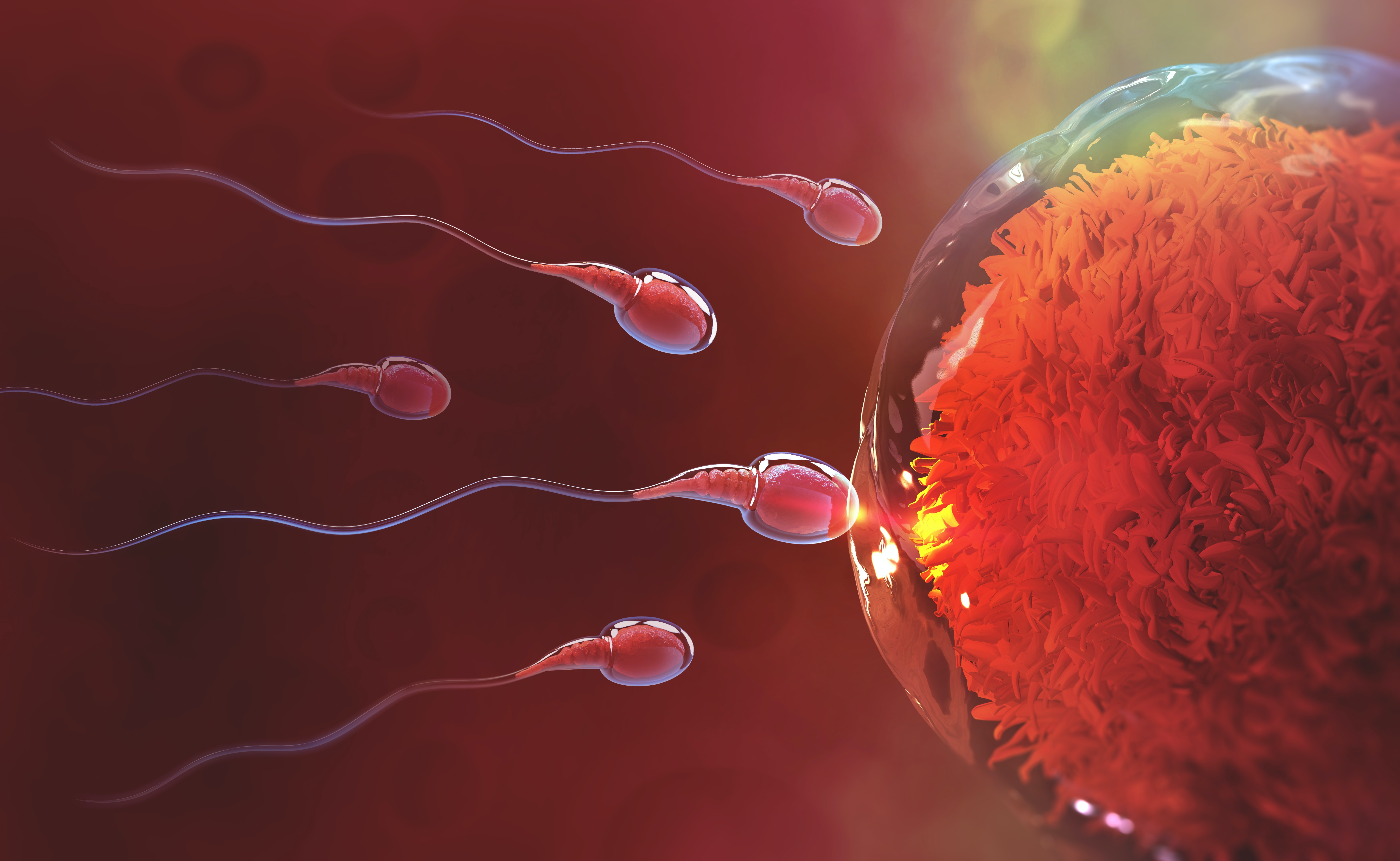 How we solved the mystery of the human sperm tail – and what it could mean for the future of IVF