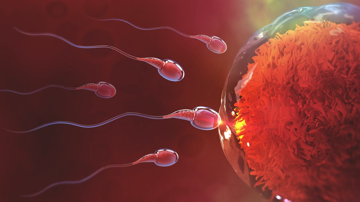 Sperm why come out not does Why is