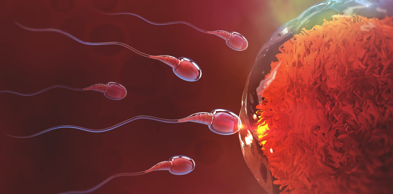 Deadly sperm buildup syndrome