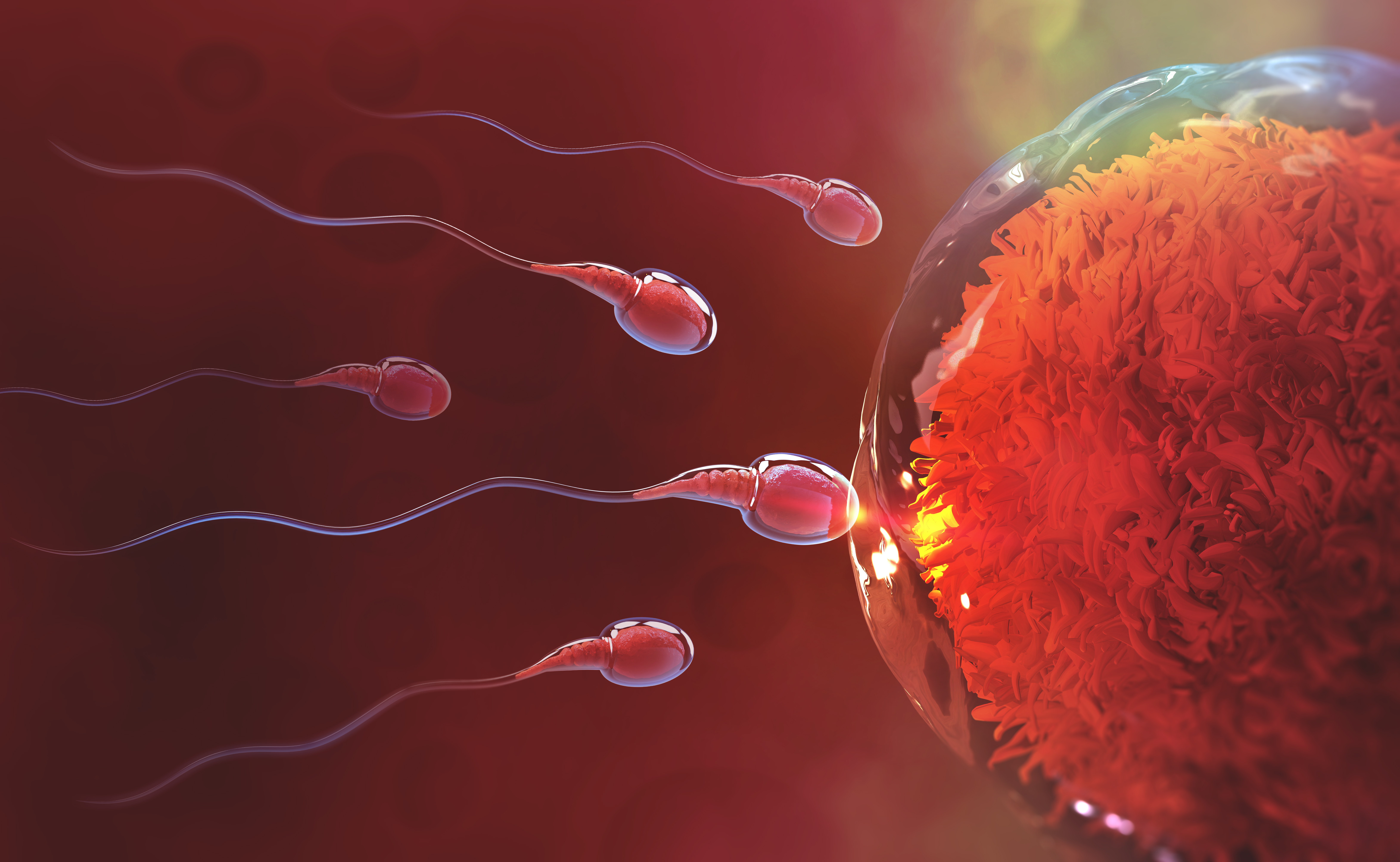 How We Solved The Mystery Of The Human Sperm Tail  U2013 And