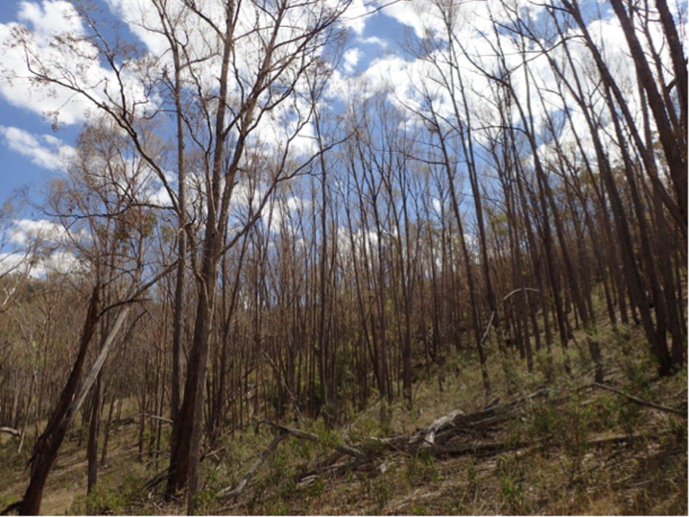 Are More Aussie Trees Dying Of Drought Scientists Need Your Help