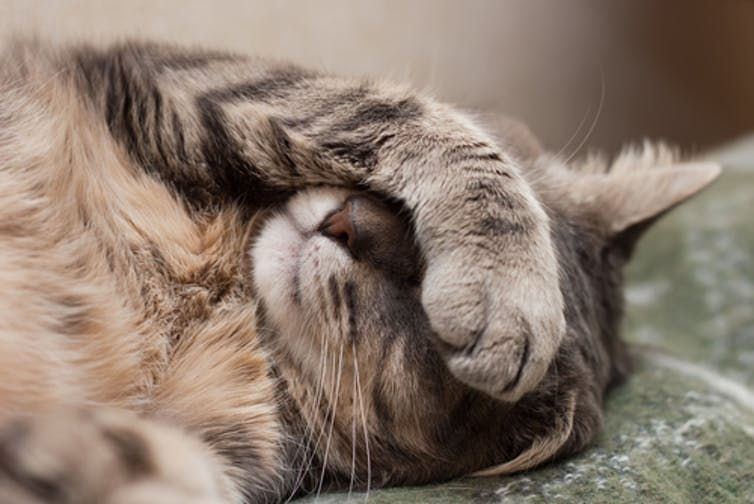 DOJ efforts to kill Obamacare, the cat with 9 lives, could cause health care havoc for millions