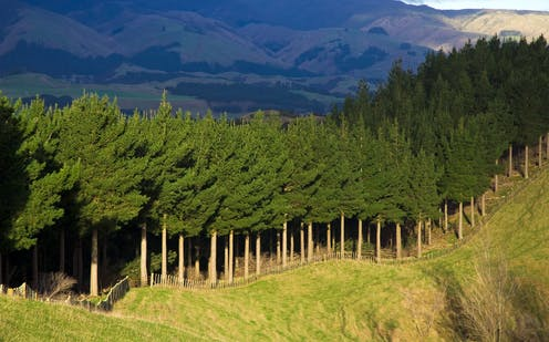 NZ's environmental watchdog challenges climate policy on farm emissions and forestry offsets