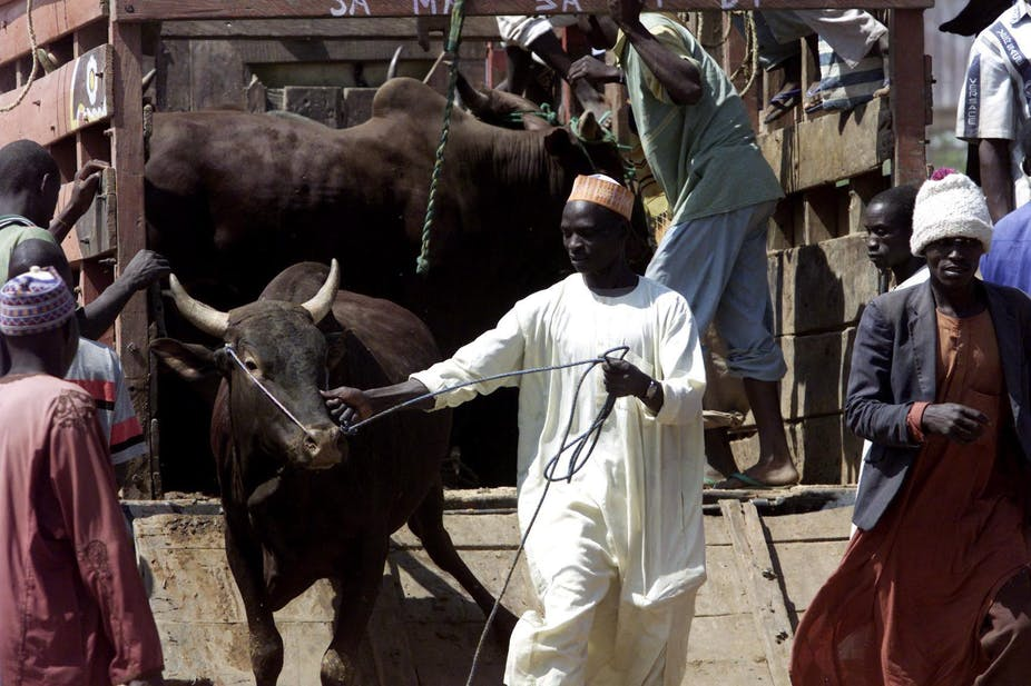 Why Nigeria's Insecure Forests Are Fertile Ground for Cattle Rustlers