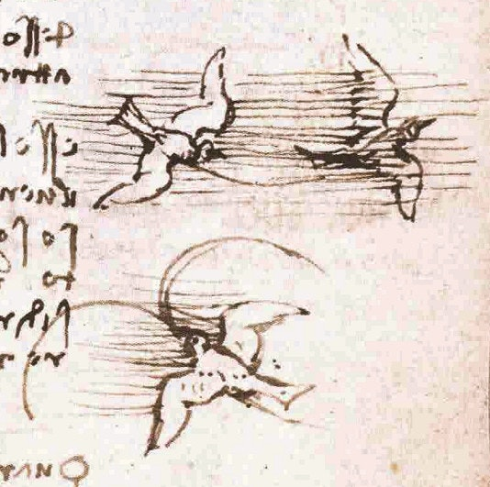 Leonardo da Vinci saw in animals the 'image of the world'