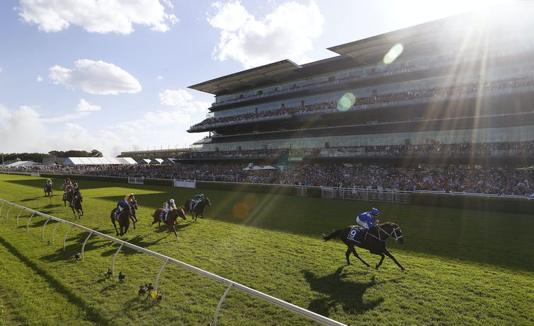 The success of Winx shows the value of symmetry in race horses