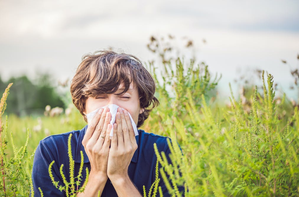 Plane trees getting on your nose? The truth about hay fever
