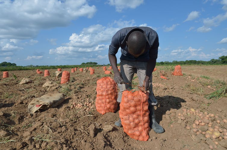 Young Zambians are looking for ways to make farming more