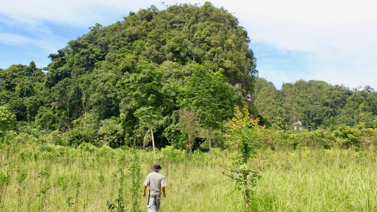Bat and bird poo can tell you a lot about ancient landscapes in Southeast Asia