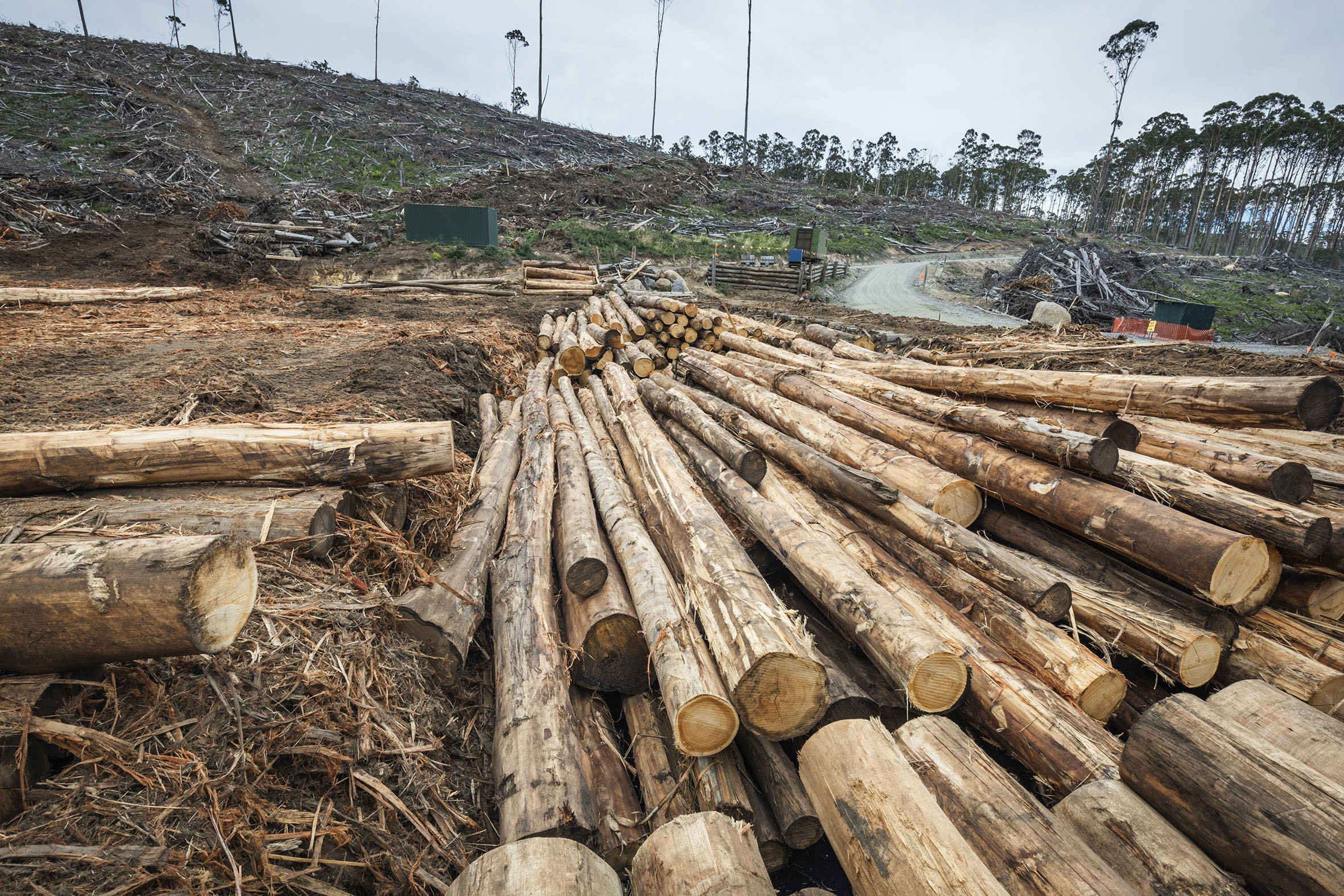 Logged native forests mostly end up in landfill, not in buildings and furniture