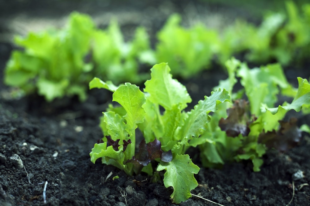 Pasha 16: Small-scale farming and agroecology