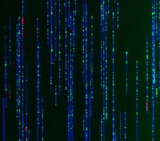 DNA as you've never seen it before, thanks to a new nanotechnology imaging method