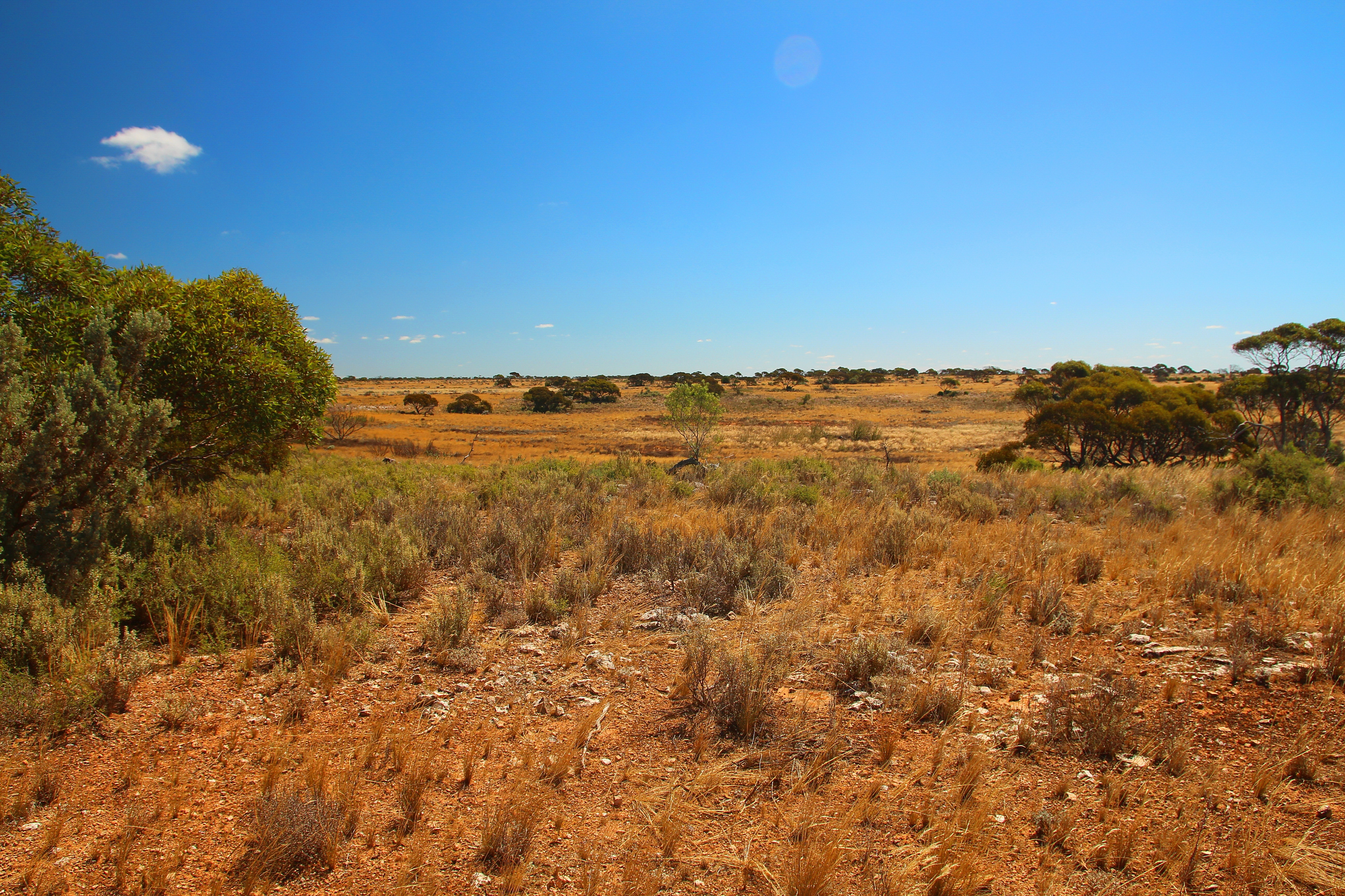 It's not worth wiping out a species for the Yeelirrie uranium mine