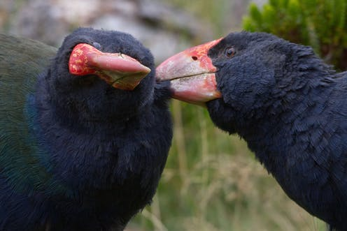Despite its green image, NZ has world's highest proportion of species at risk