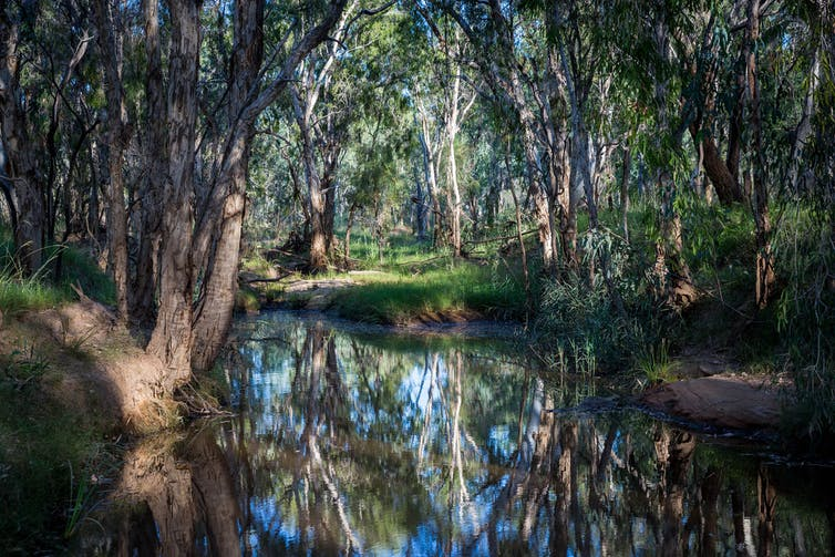 Unpacking the flaws in Adani's water management plan