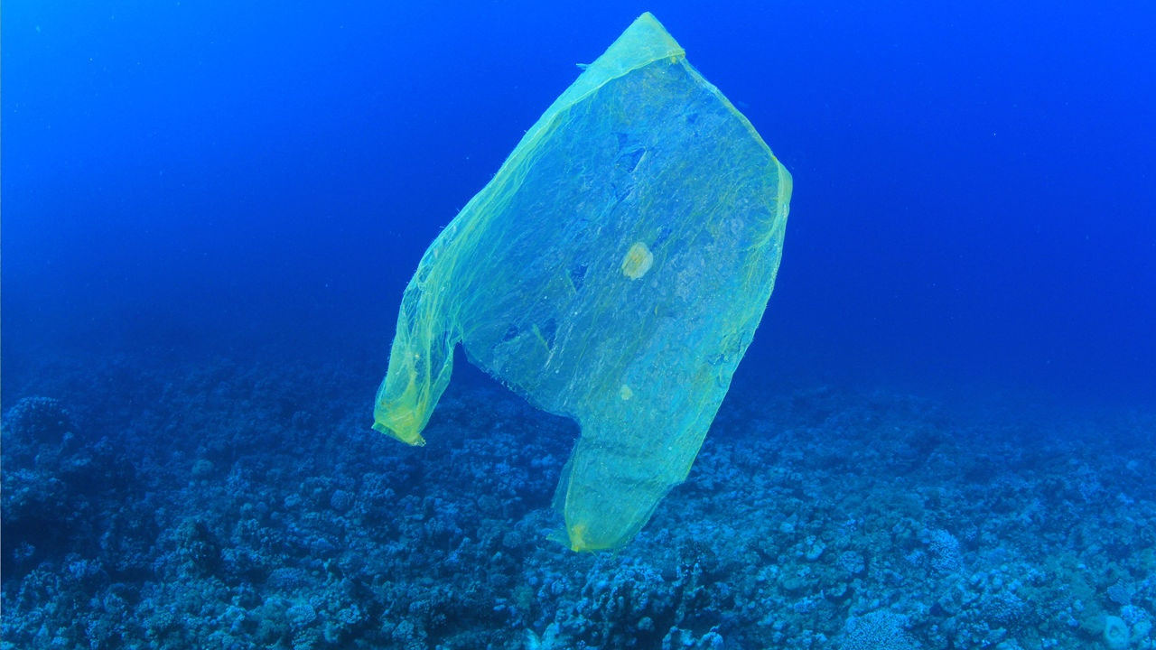 Not long before there's more plastic than fish in the sea. Photo credit: MichaelisScientists, CC BY-SA