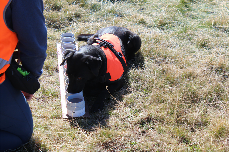 Sit! Seek! Fly! Scientists train dogs to sniff out endangered insects
