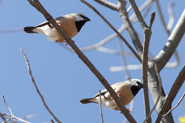 Why Adani's finch plan was rejected, and what comes next