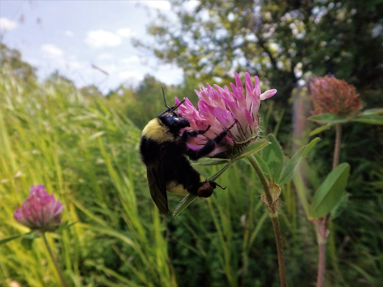 Give bees a chance: We can't afford to lose our wild native pollinators