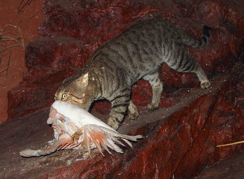 Why Australia needs to kill cats