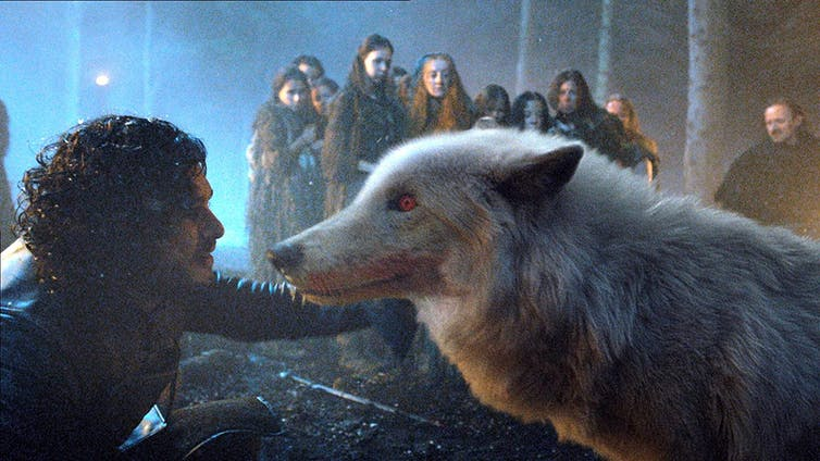 You know nothing about rehoming a pet, Jon Snow