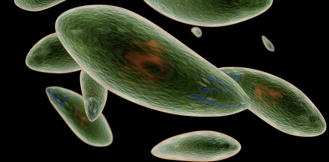 Is the brain parasite _Toxoplasma_ manipulating your behavior, or is your immune system to blame?