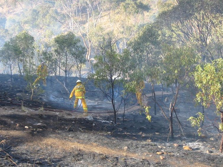Curious Kids: how do bushfires start?